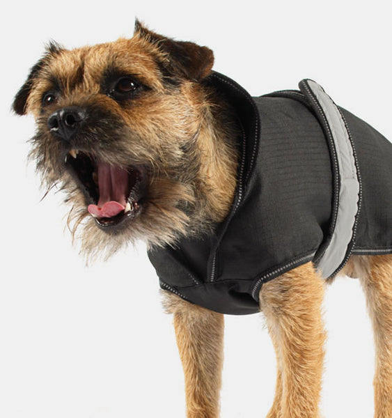 Dog Wearing a Two in One Dog Coat in Black
