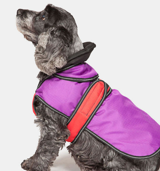 Dog Wearing a Two in One Dog Coat in Purple
