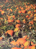 Pumpkin Patch -  12