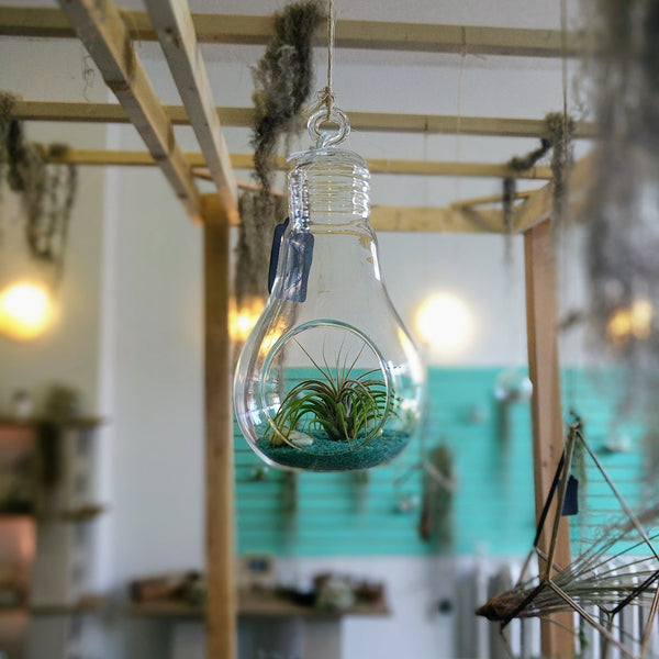 DIY Air Plant Terrarium Kit - Lightbulb - By Plant Collective | Indoor House Plants, Succulents, Air Plants & Terrariums - Toronto Canada