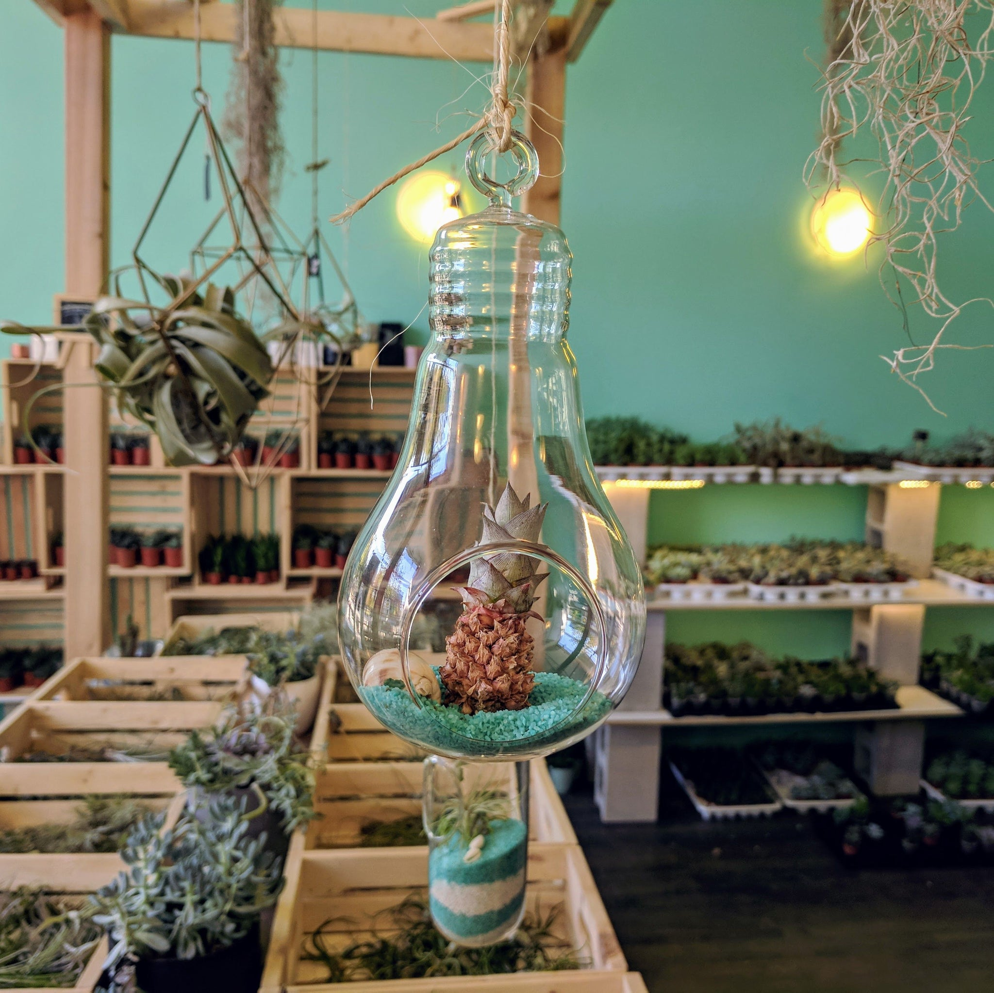 DIY Air Plant Terrarium Kit - Lightbulb - By Succuterra | Succulents, Air Plants & Terrariums
