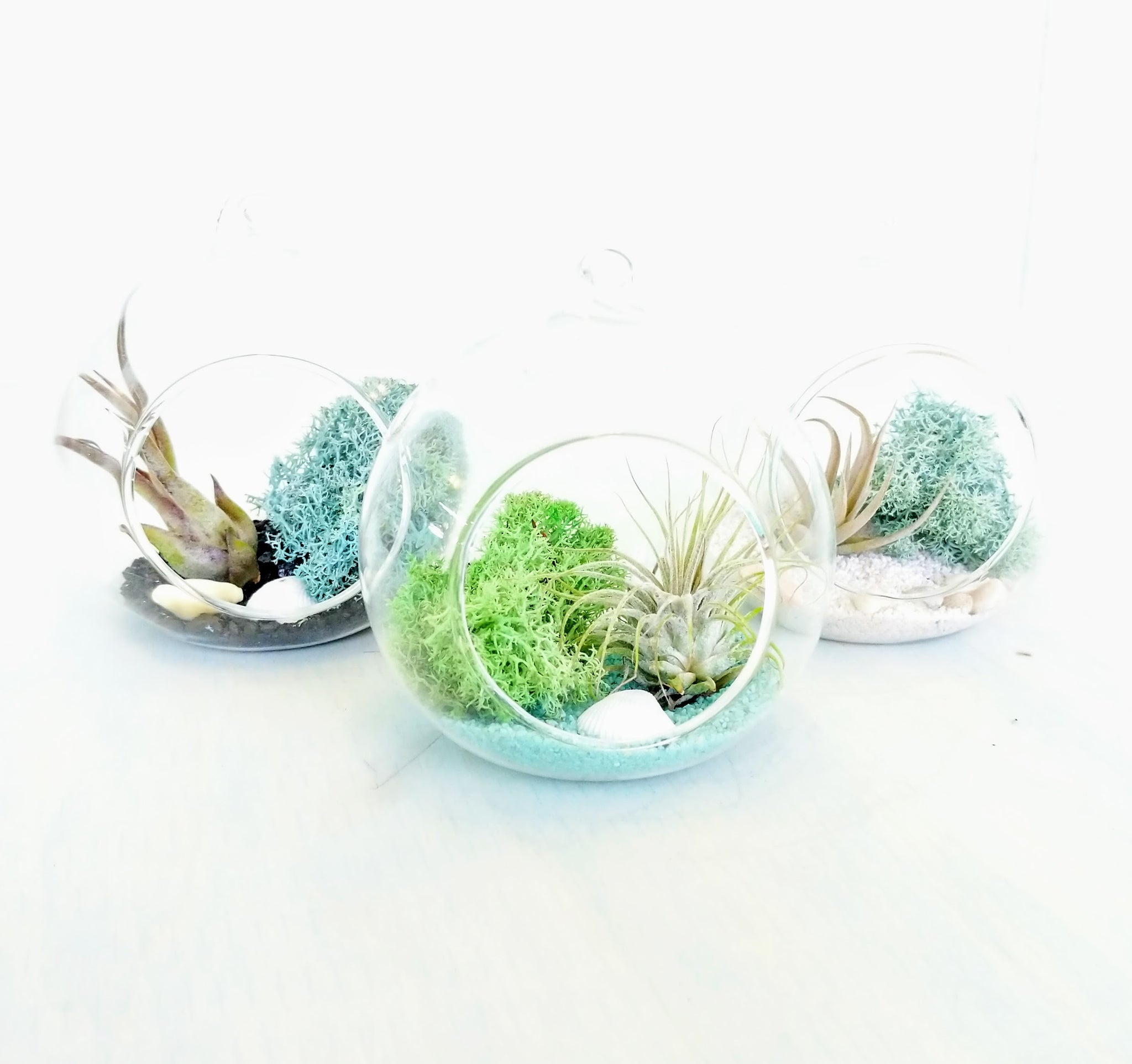 DIY Air Plant Terrarium Kit - Hanging Globe - By Plant Collective | Indoor House Plants, Succulents, Air Plants & Terrariums - Toronto Canada