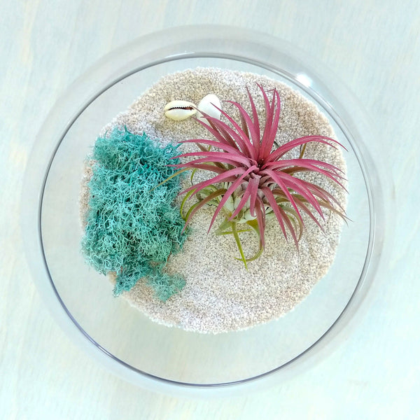 DIY Airplant Terrarium Kit - Fishbowl - By Succuterra | Succulents, Air Plants & Terrariums