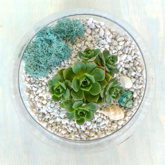 DIY Succulent Terrarium Kit - Fishbowl - By Succuterra | Succulents, Air Plants & Terrariums