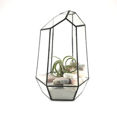 DIY Air Plant Terrarium Kit - Tower - By Succuterra | Succulents, Air Plants & Terrariums
