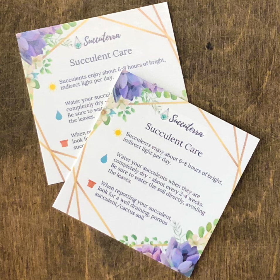 Succulent Care Card - By Succuterra | Succulents, Air Plants & Terrariums