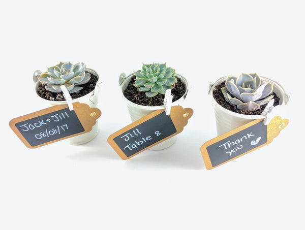 Succulent Wedding Favors - White Pails - By Succuterra | Succulents, Air Plants & Terrariums