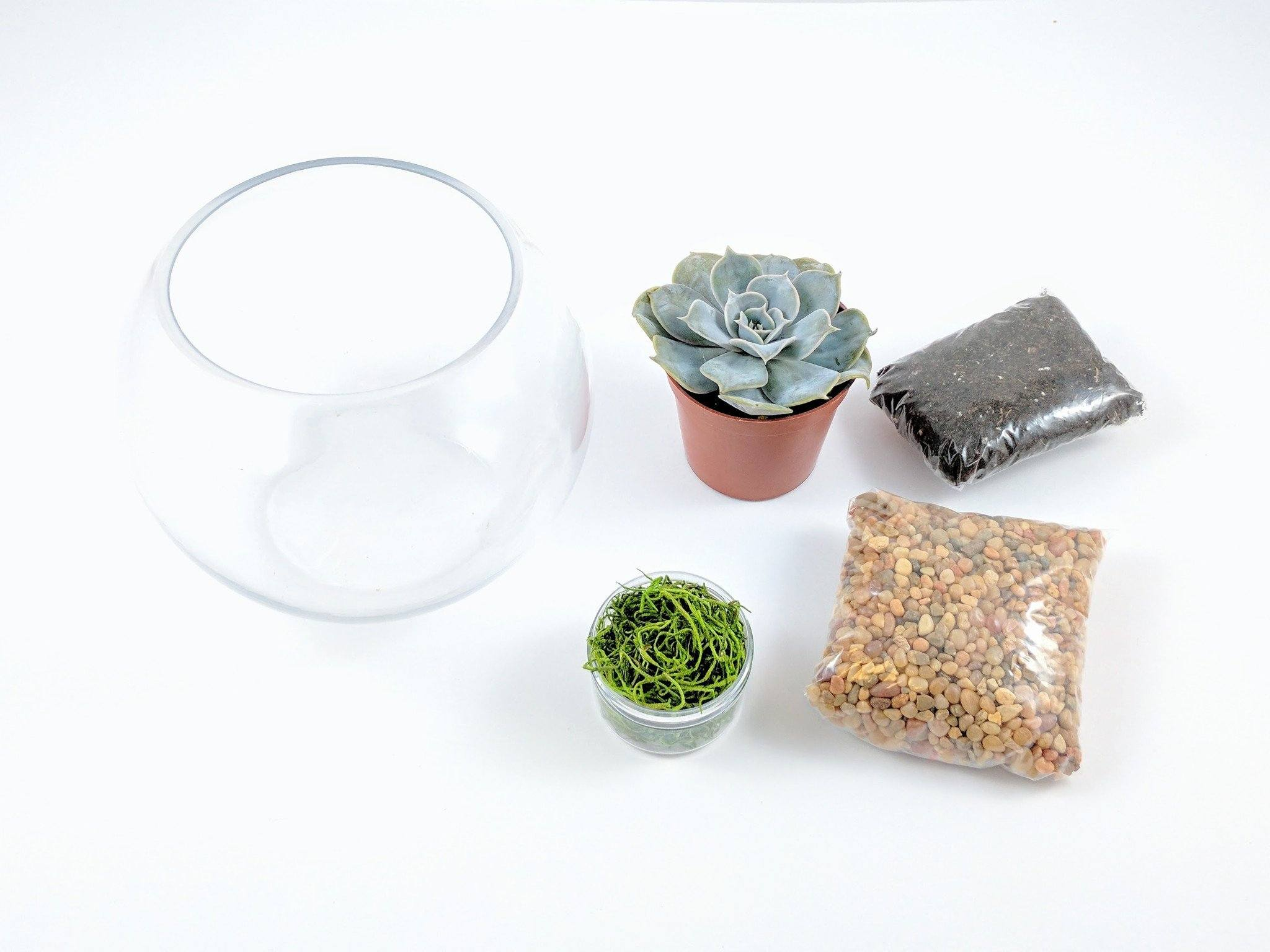 DIY Terrarium Kits - DIY Succulent Terrarium Kit - Fishbowl