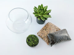 DIY Succulent Terrarium Kit - Fishbowl - By Plant Collective | Indoor House Plants, Succulents, Air Plants & Terrariums - Toronto Canada