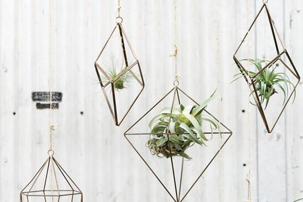 Air Plant Hanger - By Succuterra | Succulents, Air Plants & Terrariums