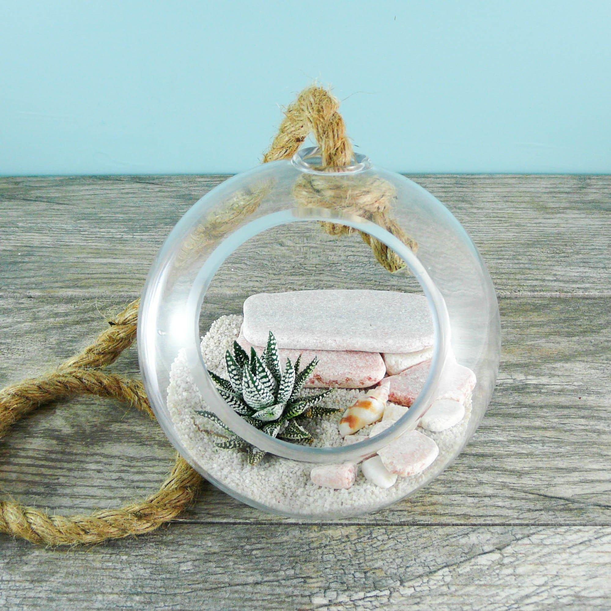 Roped DIY Hanging Globe Succulent Terrarium - By Succuterra | Succulents, Air Plants & Terrariums