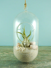 The Pill Hanging Terrarium - By Succuterra | Succulents, Air Plants & Terrariums