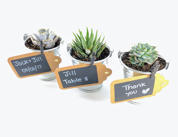 Succulent Wedding Favors - Tin Pails - By Succuterra | Succulents, Air Plants & Terrariums