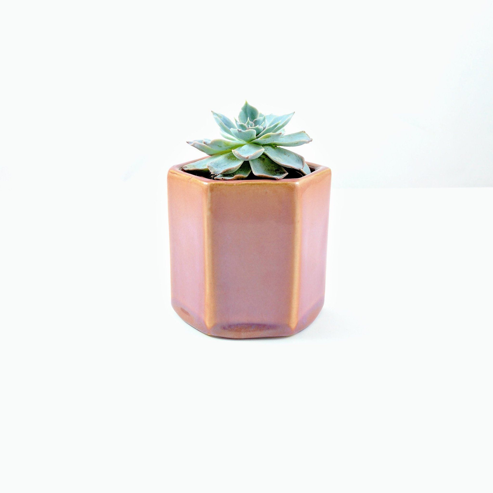Tula Pot - Dusty Rose - By Succuterra | Succulents, Air Plants & Terrariums