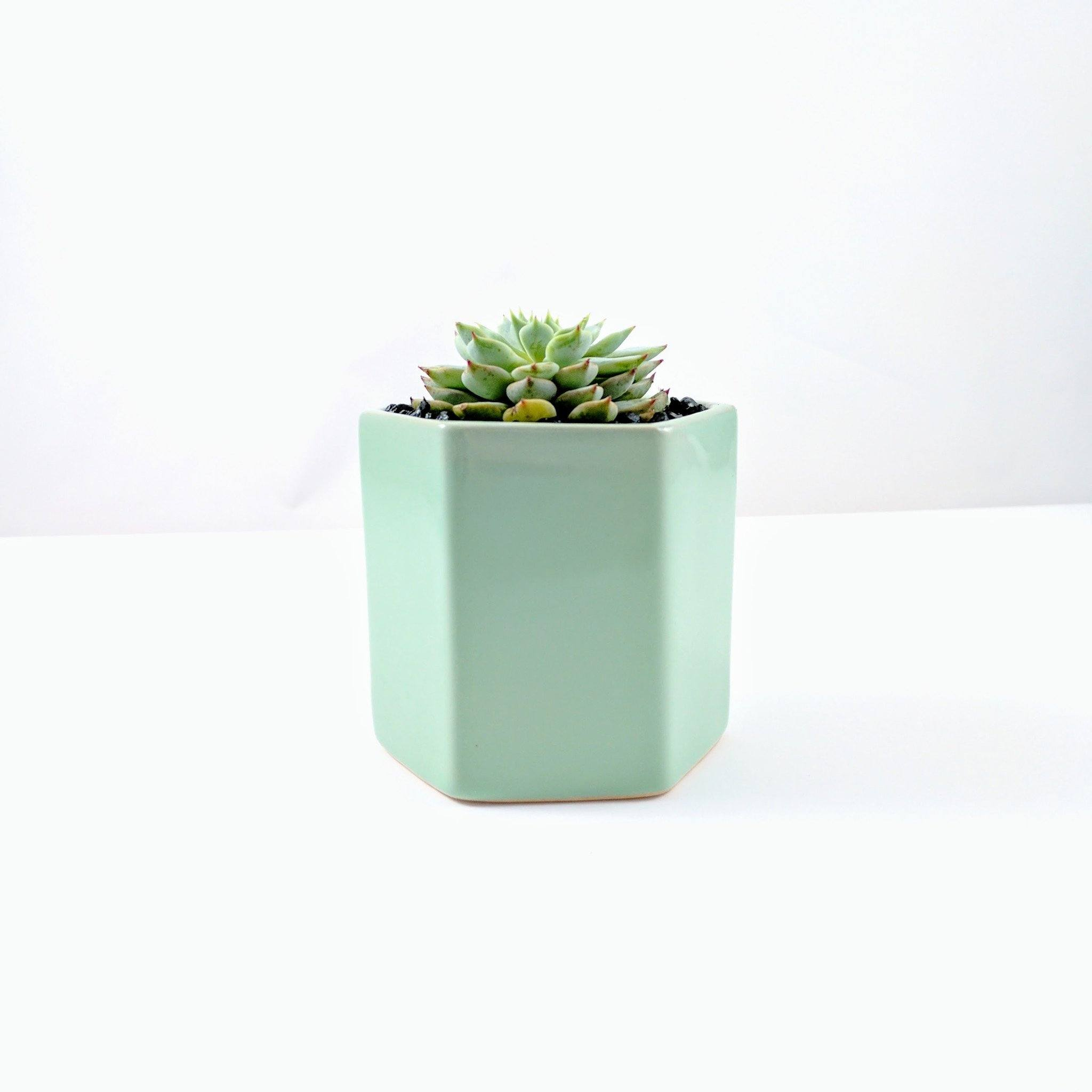 Tula Pot - Seafoam Green - By Plant Collective | Indoor House Plants, Succulents, Air Plants & Terrariums - Toronto Canada