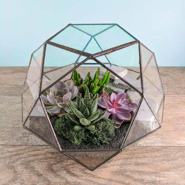 Geode Terrarium Kit - By Succuterra | Succulents, Air Plants & Terrariums
