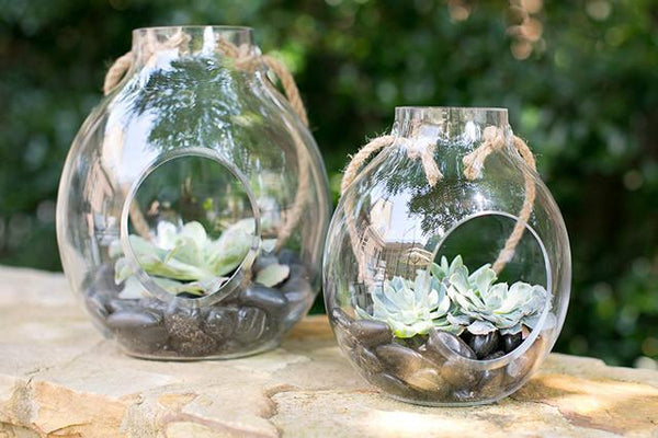 The Paradise Terrarium - By Succuterra | Succulents, Air Plants & Terrariums