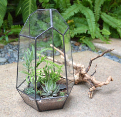 Tower Terrarium - By Succuterra | Succulents, Air Plants & Terrariums