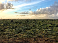 Moss covered lava fields
