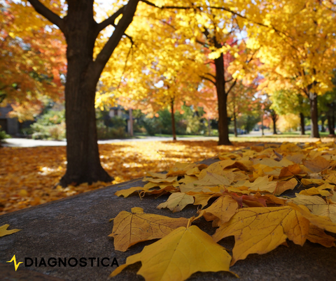 How to Ride Safe During Fall: Common Road Hazards Diagnostica