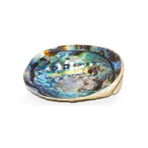 "5""- 6"" Abalone Shell incense burner - www.myhomeandgardendecor.com"