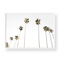 PALM TREES - Landscape
