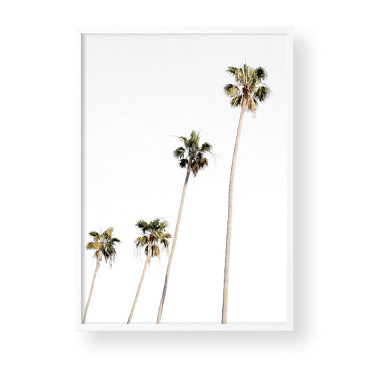 PALM TREES - Portrait
