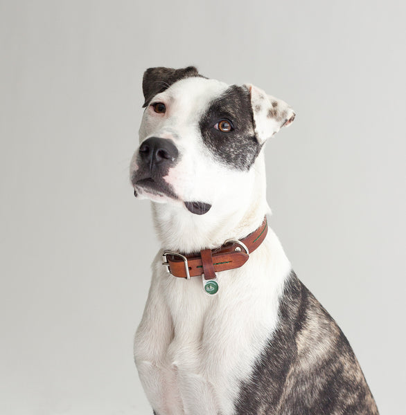 hunter bennington leather dog accessories. handmade dog collars and leads, made to order in the UK.
