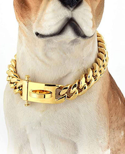 Gold Dog Chain Collar With Design Secure Buckle
