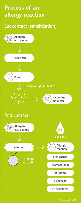 process of allergy
