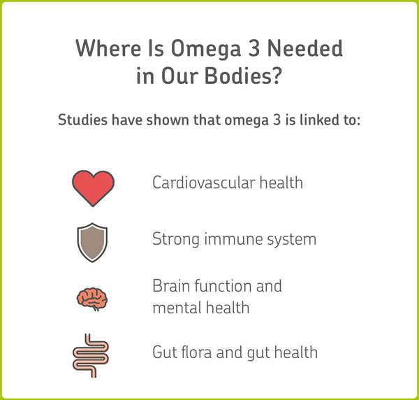 Where omega 3 is needed in our bodies