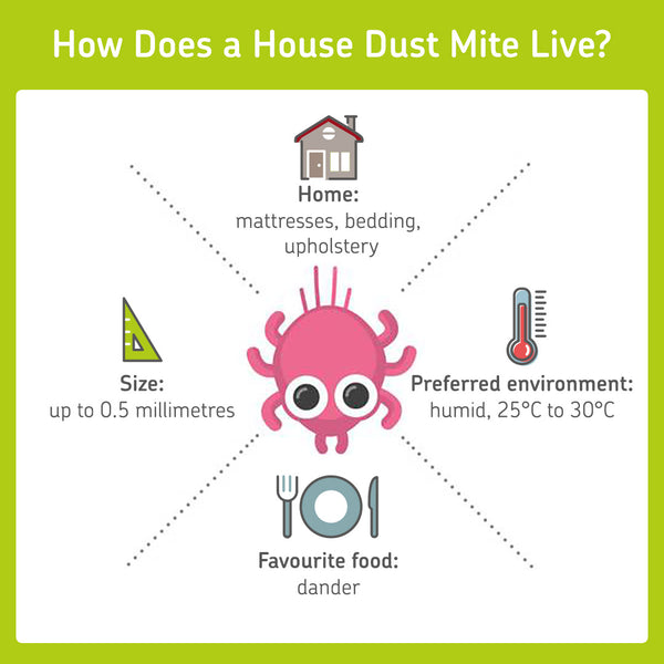 information about where a dust mite lives