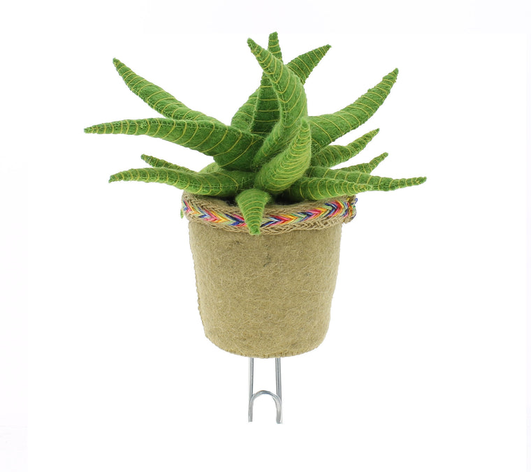 Fiona Walker England -  Cactus Wall Hook - Aloe