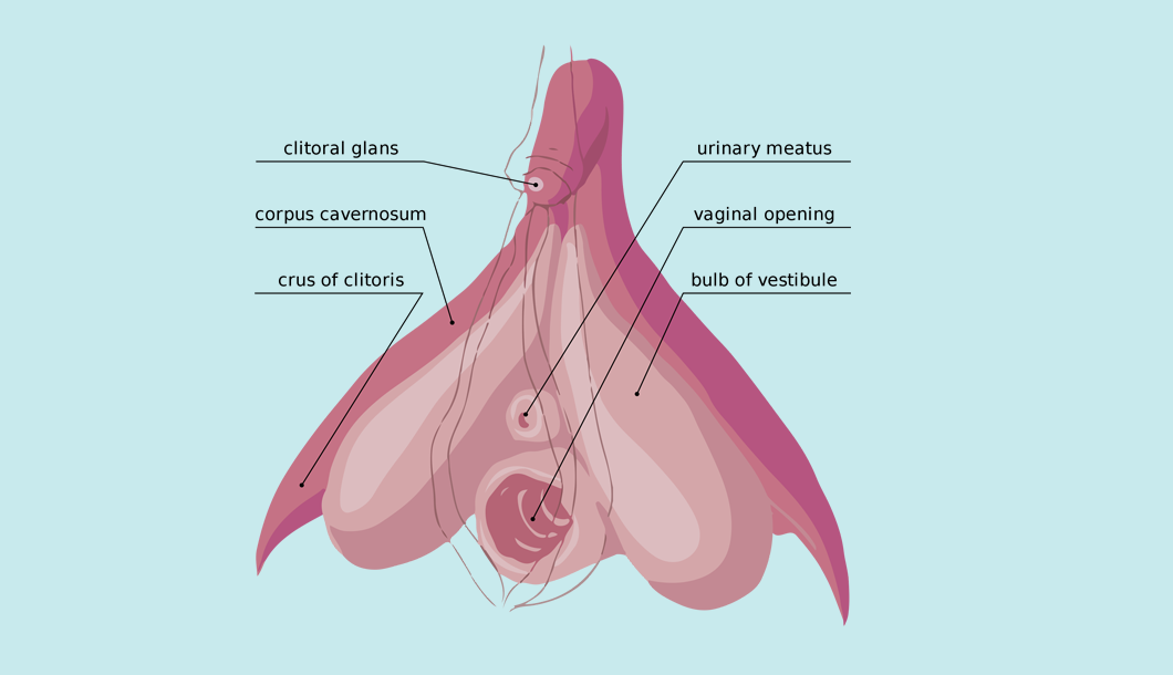 Lovely explains - The Clitoris (Pleasure Infographic)