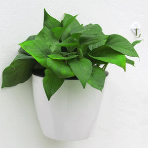 Modern Design Home Wall Hanging Flower Pot for Hydroponics