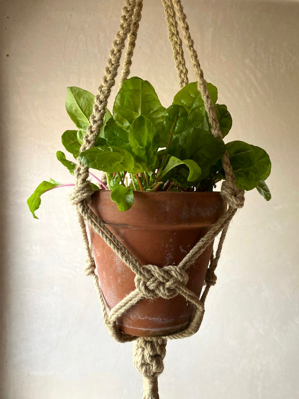 The Outdoor Plant Hanger