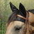 Cashel Comfort Ears-Fly Protection