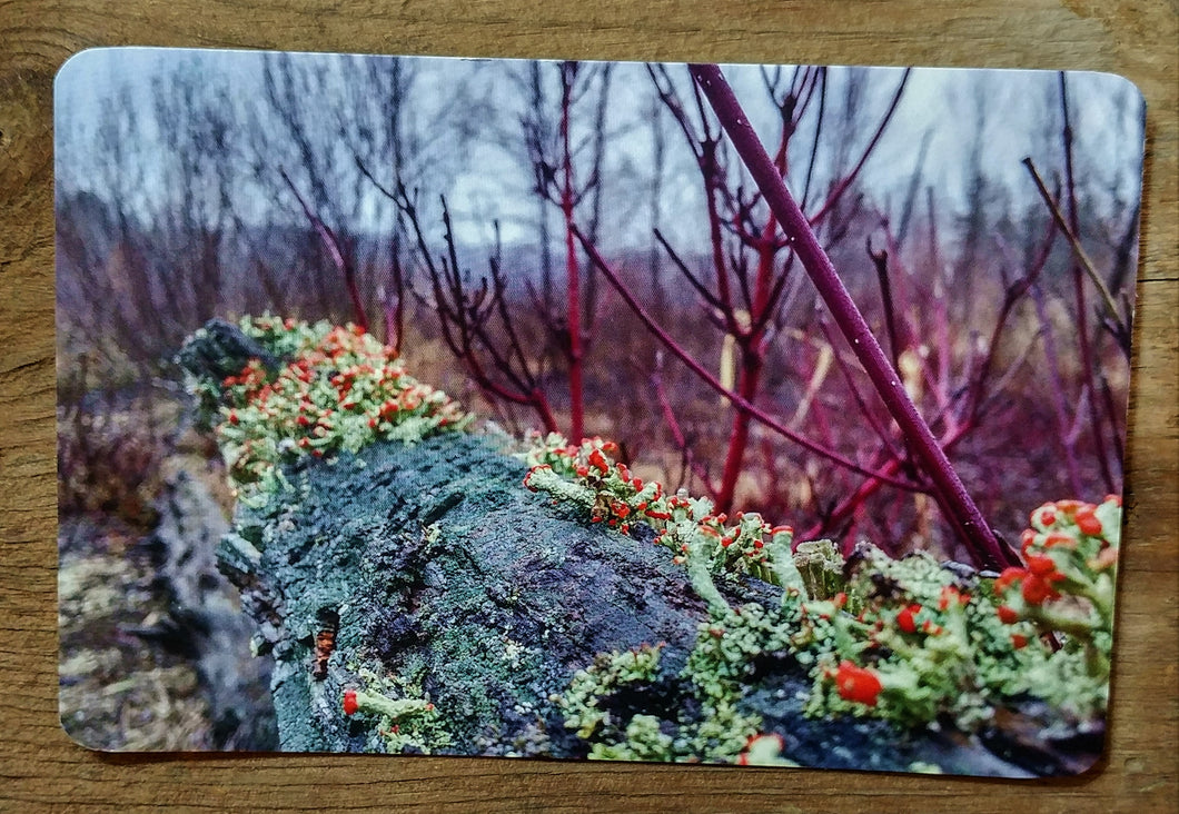 fall moss tree trunk postcard nature inspired postacrds