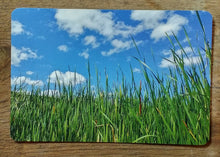 artist postcards, green on blue postcard, old state hospital grounds traverse city michigan, photos