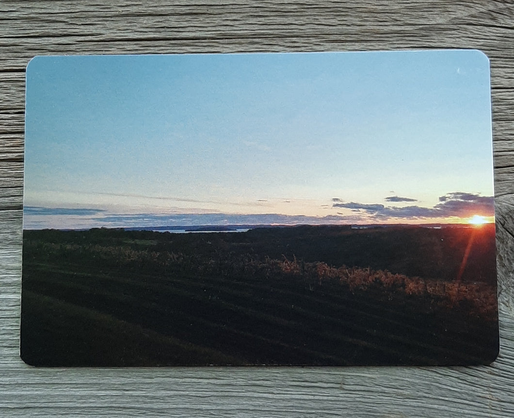 sunset in the vines postcard michigan postcards