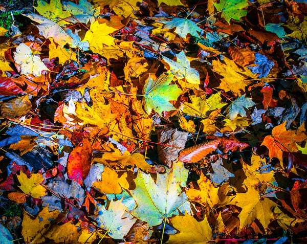 Paper Print Carpet of Leaves JaiGieEse PhotoArt