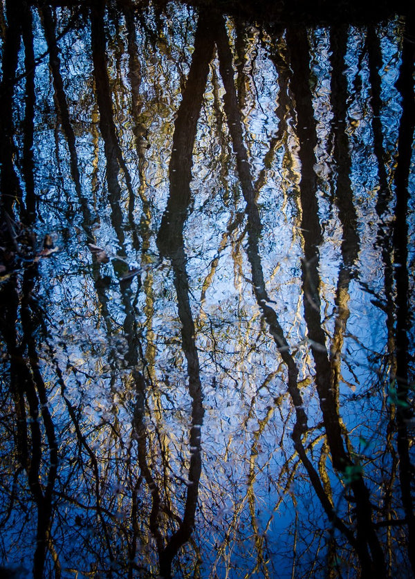 Paper Print Creek Reflections
