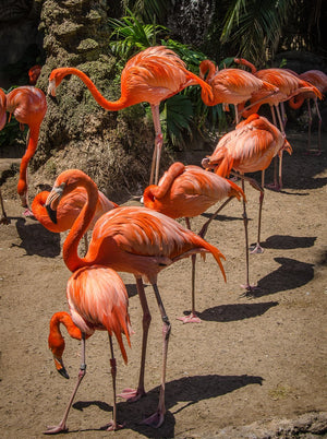 Digital Download Flamingos LIC