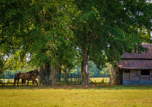 Digital Download Horses and Barn LIC