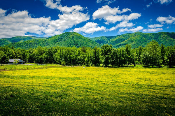 Paper Print Meadow at Cades Cove JaiGieEse PhotoArt