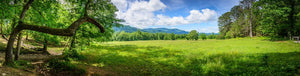 Paper Print Smoky Mountain Meadow