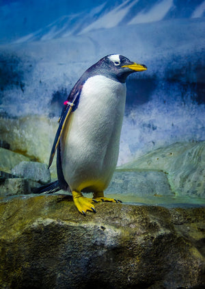 Digital Download Standing Penguin LIC