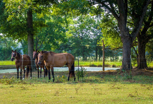 Digital Download Three Horses LIC
