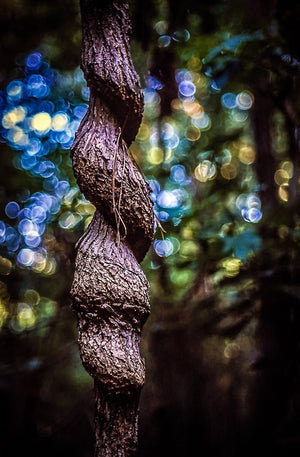 Digital Download Twisted Tree LIC JaiGieEse PhotoArt