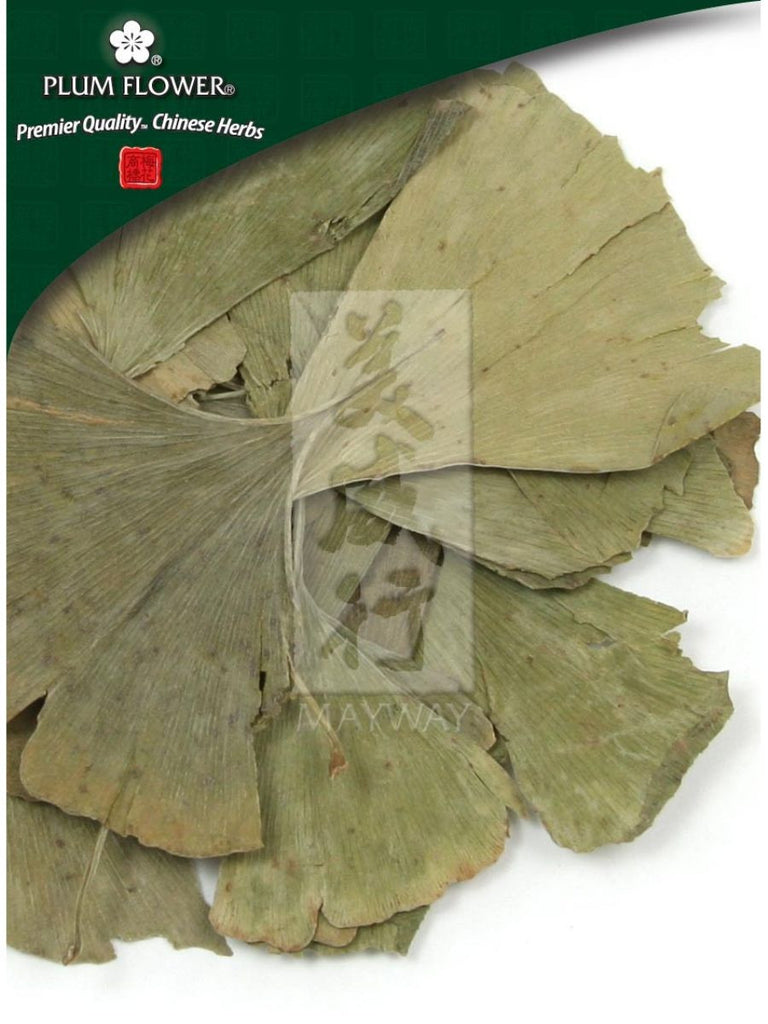 Ginkgo biloba leaf, Whole Herb, 500 grams, Bai Guo Ye